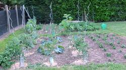 Un petit potager, trois mois après les premières plantations
