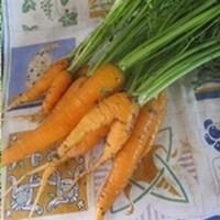 Chronique d'un potager ordinaire : suite des semis et plantations  2015 : carottes