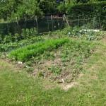Potager - Vue en juin